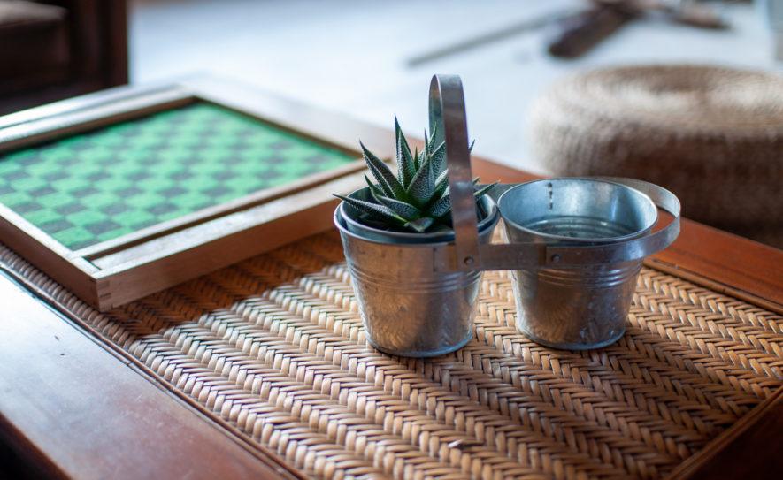 Plante grasse sur une table basse du salon du gite en dombes